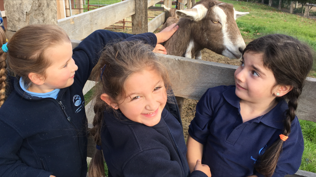 Edendale Community Farm Year 1 & 2